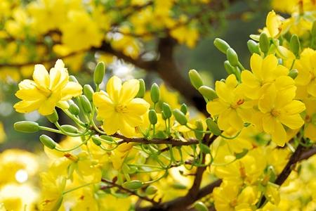 Ý nghĩa của một số loài hoa chưng Tết