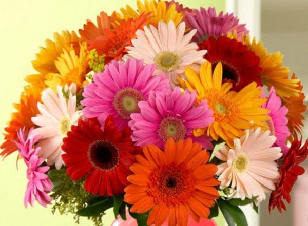 Các loại hoa trang trí phòng khách mang lại may mắn cho gia chủ