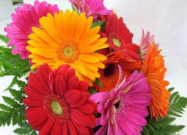 Ý nghĩa của hoa đồng tiền – loài hoa của sự thành công