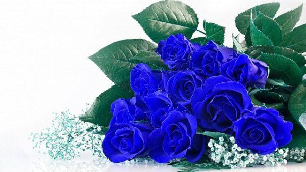 Hoa hồng xanh có thật không?