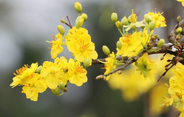 Tuyển tập những loài hoa có tên đẹp nhất